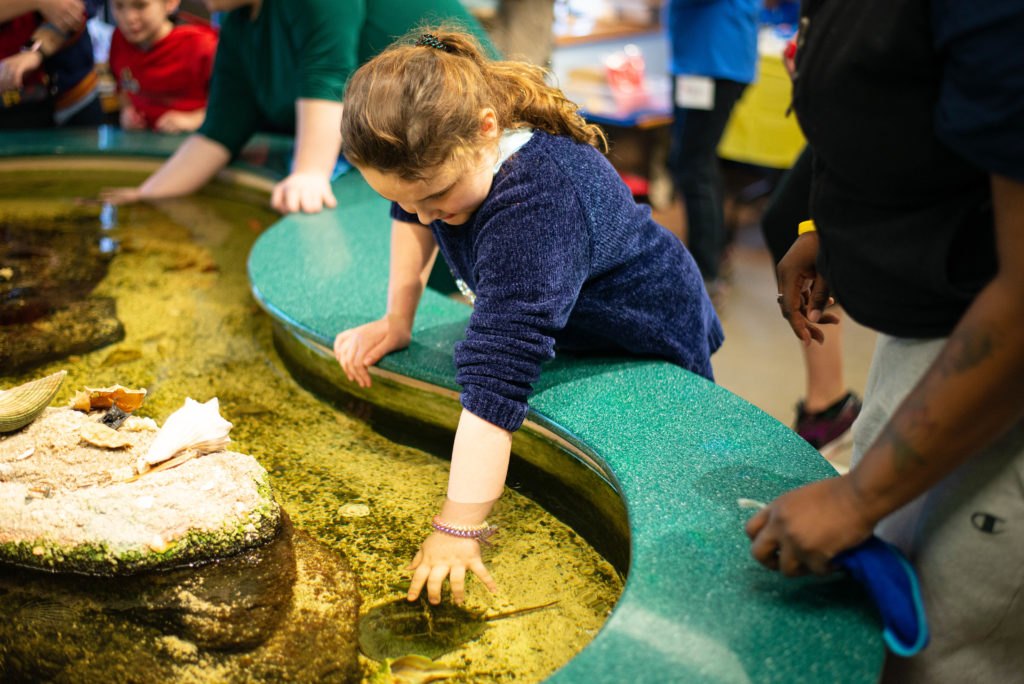 Girl interacting with horseshoe crab at Touch Tank